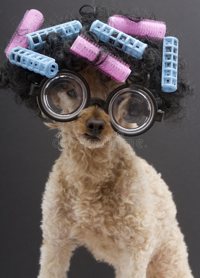 Free Big Glasses, Hair And Curlers Royalty Free Stock Image - 33344006