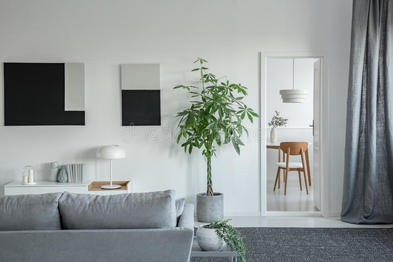 Big green plant in concrete pot in bright living room interior with grey furniture stock images