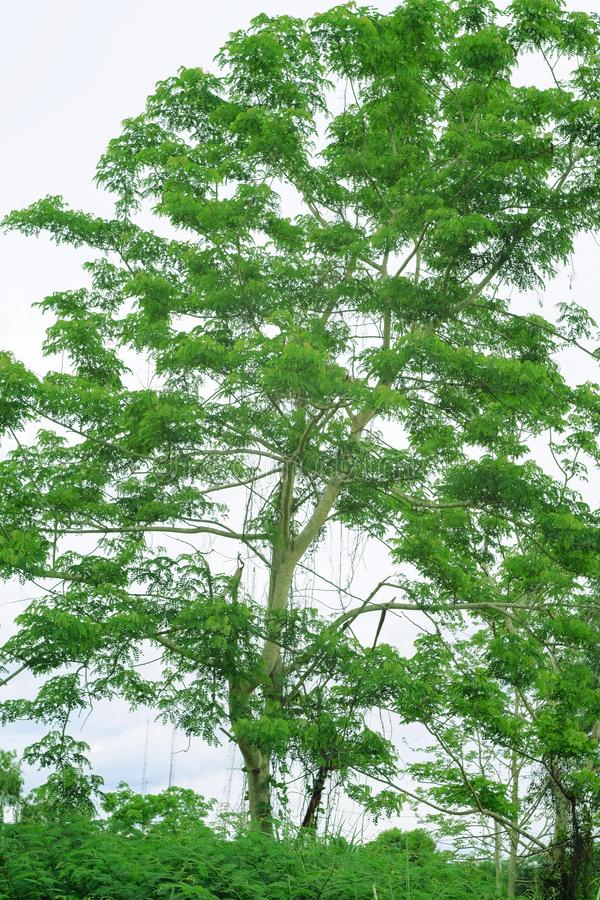 Big green tree on nature. Background stock images