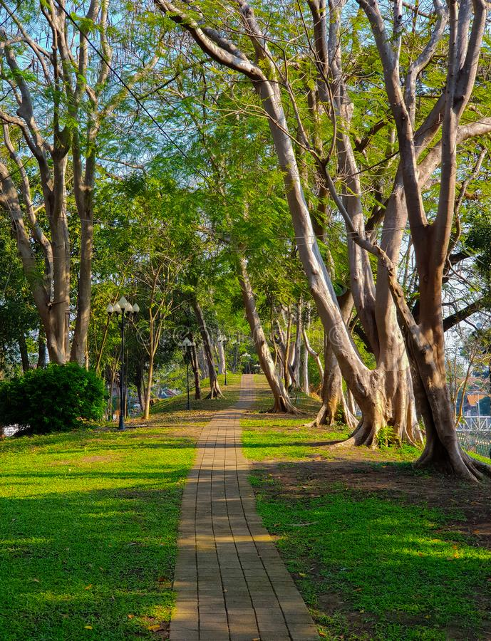 Big Green Tree and Park Pathwalk. The Big Green Tree and Park Pathwalk stock photos