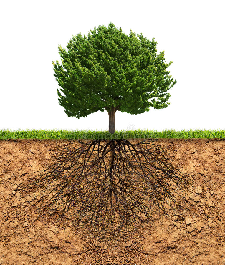Free Big Green Tree With Roots Beneath Royalty Free Stock Images - 46347809