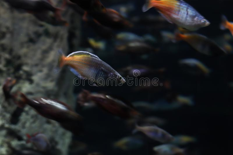 Big group of fish swimming in ocean. The underwater world, flora and fauna. Diving and spearfishing. Exotic tourism. stock photography