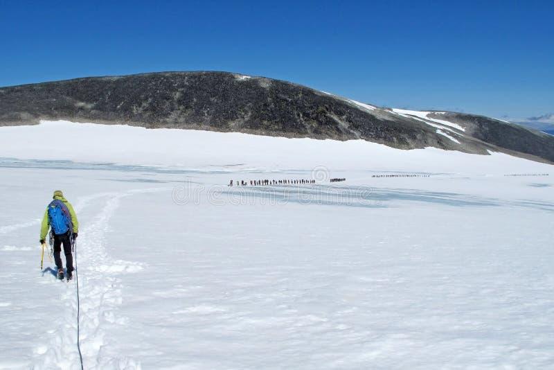 Big group of people trekking on glacier to Mount Galdhoppigen, dangerous mass tourism in Norway stock photo