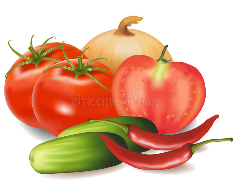 The big group of vegetables. Photo-realistic illustration. The big colorful group of vegetables stock illustration