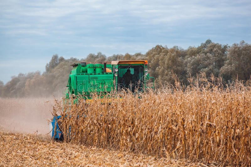 Big harvester in the field on a sunny day mowing ripe, dry corn. stock photography