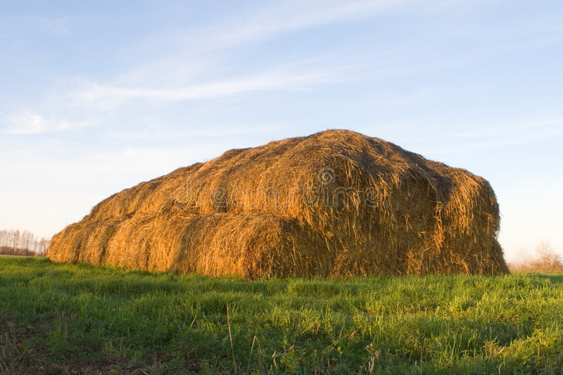 Big haystack. On the grass royalty free stock photos