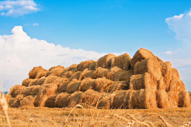 Big haystack at field. In the countryside royalty free stock image