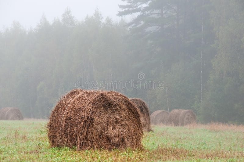 Big haystack on a morning foggy field. Big haystack on field captured in a foggy morning with forest on background royalty free stock images