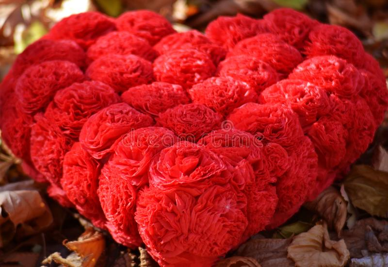 Big heart of red roses. On the background of autumn foliage royalty free stock photography