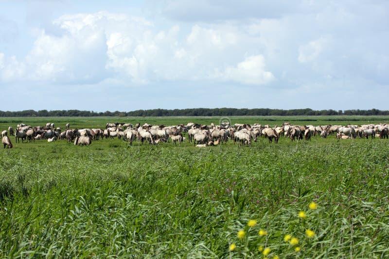 Download Big herd wild horses stock image. Image of horse, horses - 25393815