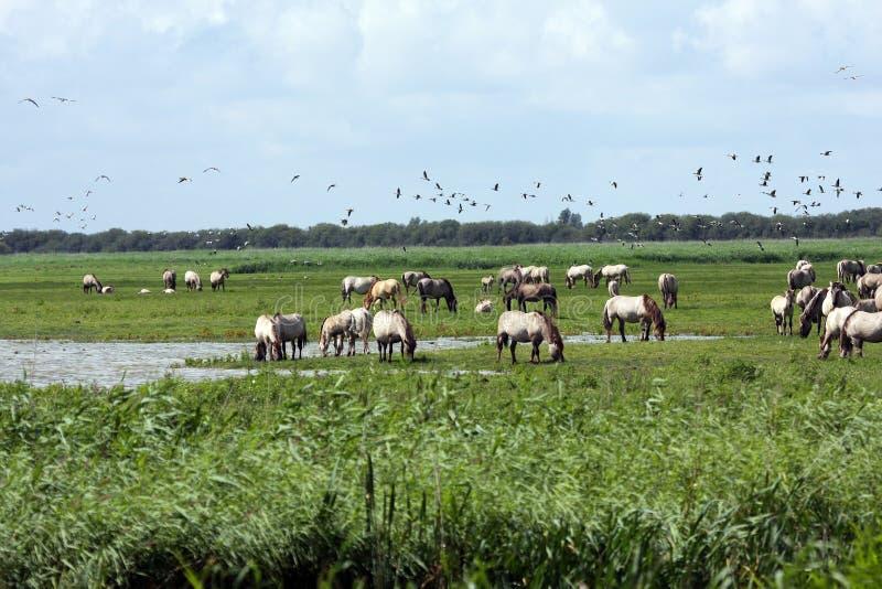 Download Big herd of wild horses stock image. Image of horses - 25400021