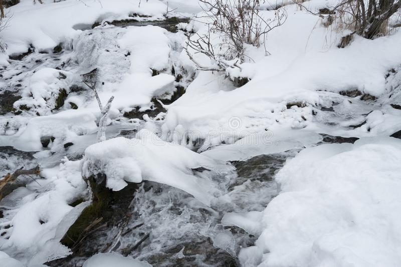 Big Hill Springs Provincial Park stream in winter. Stream adjacent to hike in Big Hill Springs Provincial Park in Alberta in the winter with snow stock photo