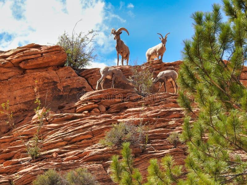 812 Wildlife Zion Photos - Free & Royalty-Free Stock ...