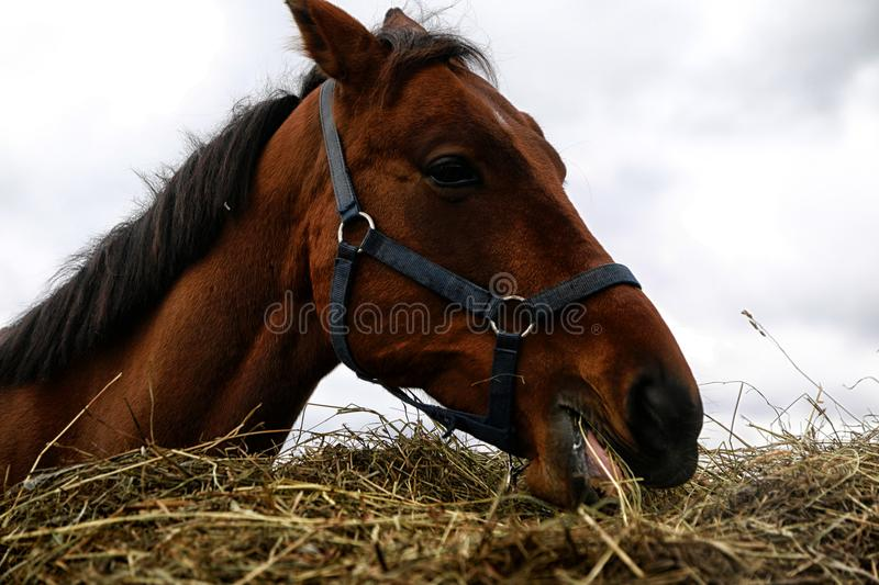 Big horse near a big haystack. In a summer day royalty free stock photography