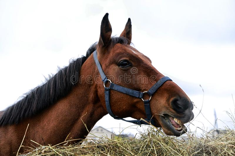 Big horse near a big haystack. In a summer day royalty free stock images