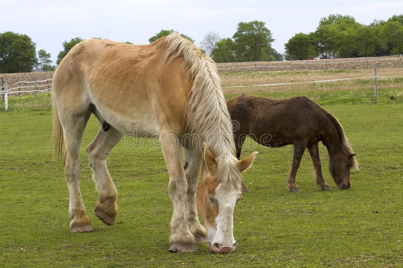 Download Big Horse Small Horse stock image. Image of mammal, horse - 14193049