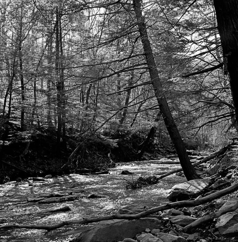 Free Big Hunting Creek In Maryland Royalty Free Stock Image - 181469736