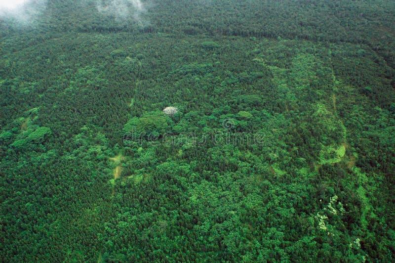 Big Island aerial shot - rain forest stock photo