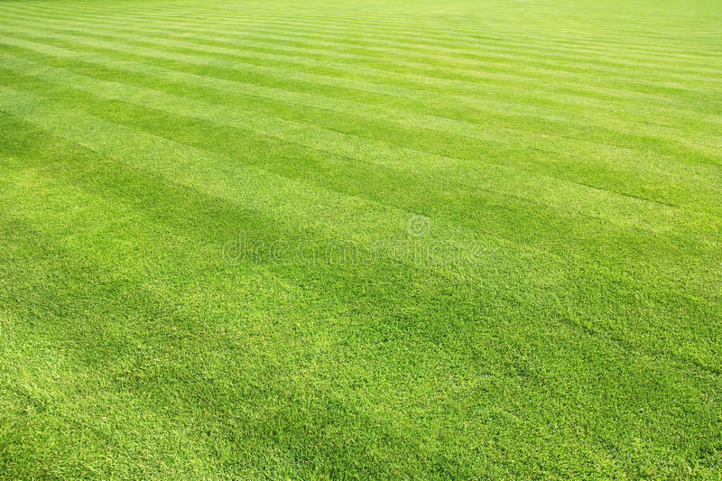 Big lawn royalty free stock photography