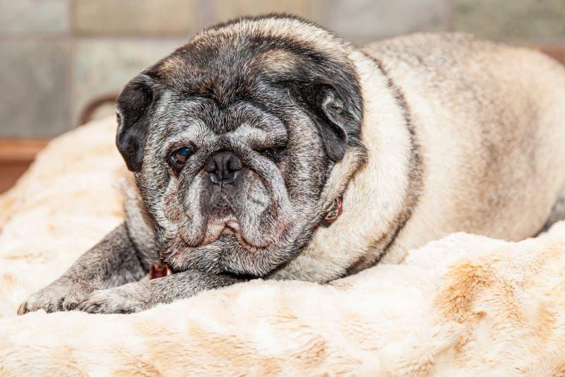 Faux Fur Dog Bed Large