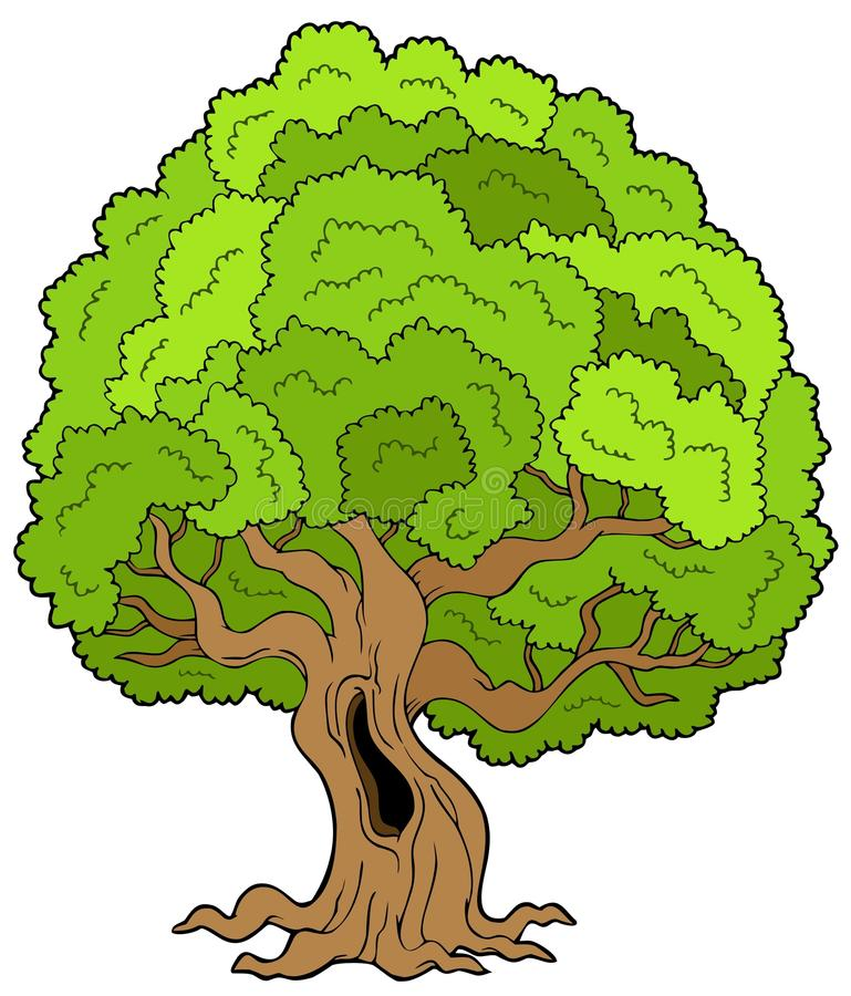 Download Big Leafy Tree Royalty Free Stock Photos - Image: 13357718