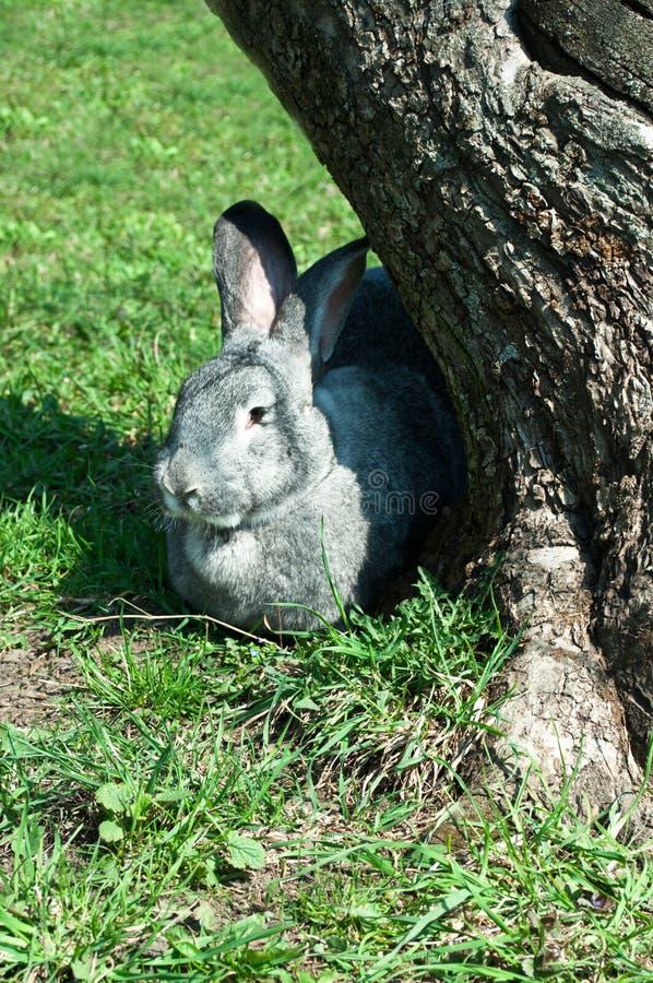 Big mammal rabbit