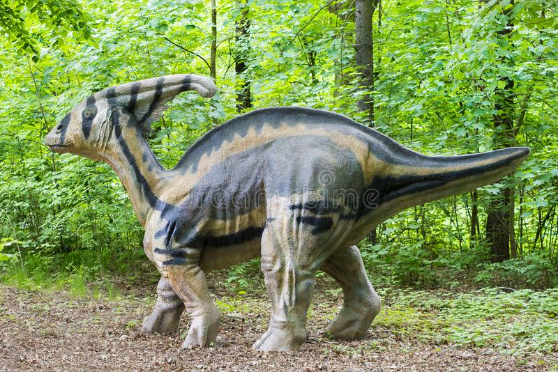 Big model of prehistoric dinosaur parasaurolophus in live size. Realistic scenery in green forest.  royalty free stock photos