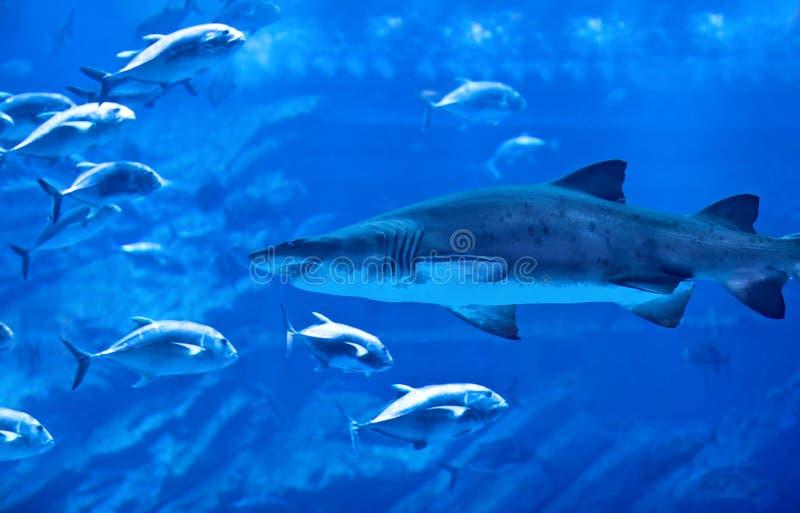 Big Natural Aquarium Stock Images