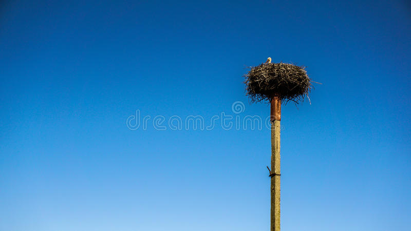 Big nest on the pole. Big stork nest on the pole, blue sky in the background royalty free stock photos