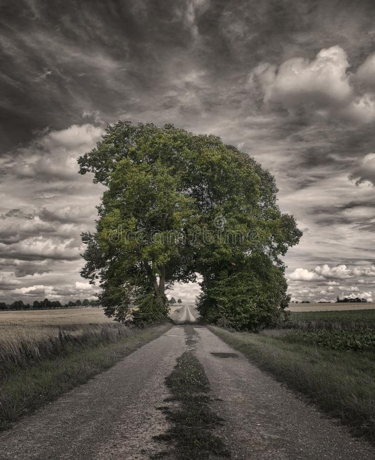 Big Oak Tree in a Rice Field Greyscale Photography royalty free stock photos