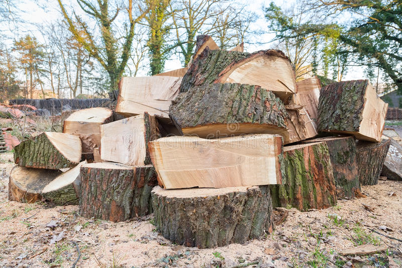 Big oak tree trunks sawn in parts. Lying in stack royalty free stock images