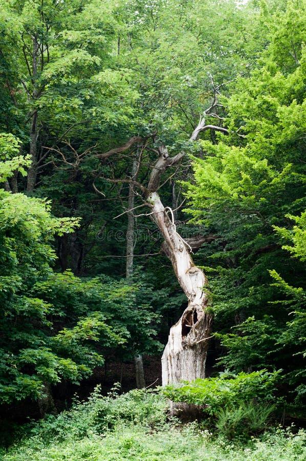 Download Big Old Tree Stock Image - Image: 27689041