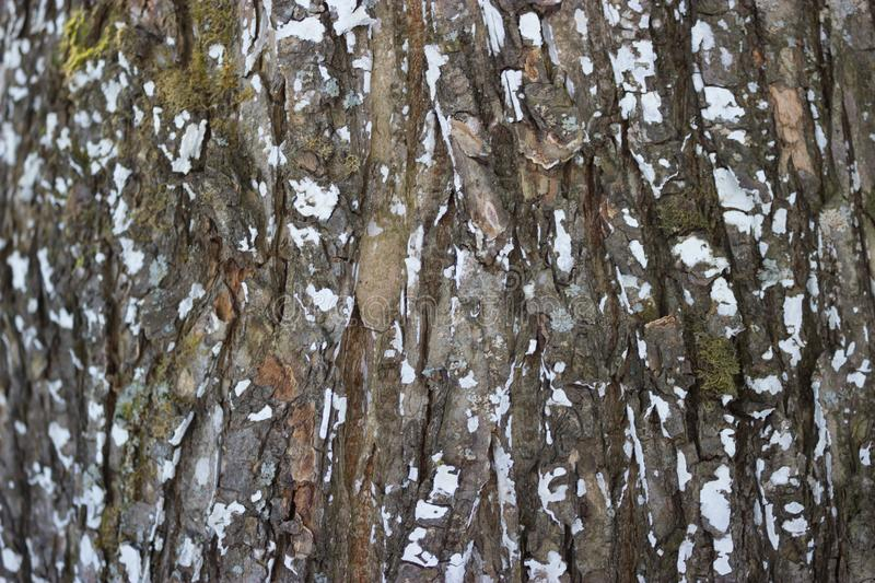 Big old tree texured bark stock photography