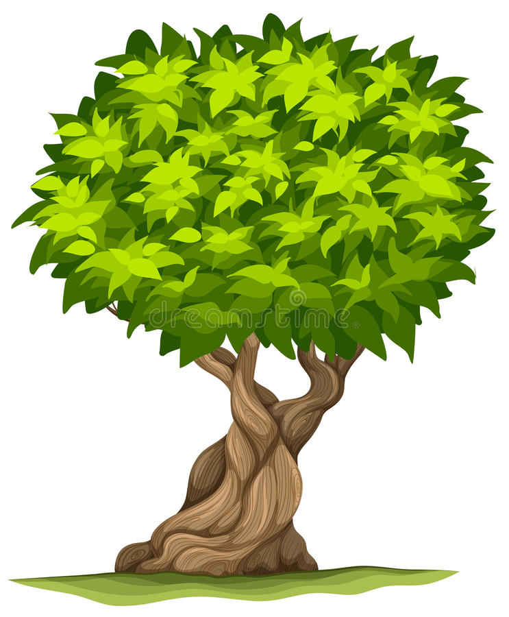 Big old tree stock illustration