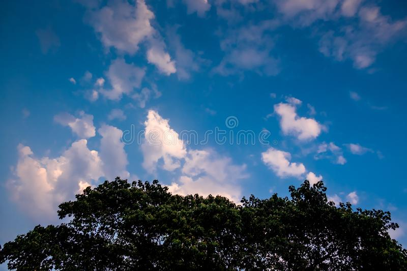 Big old trees against clear blue sky with white fluffy clouds scattered all over. royalty free stock photography