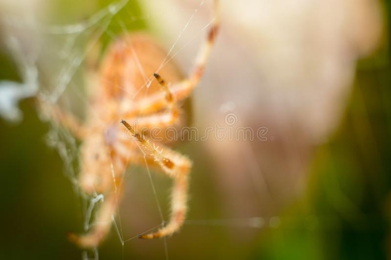 Big orange spider leg isolated with blurred green and brown leafs in background.  royalty free stock image