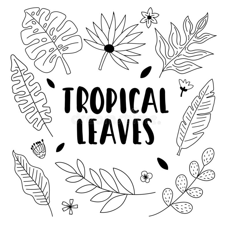 Big Outline Handdrawn Collection Of Tropical Leaves And Flowers Stock Vector Illustration Of Banana Modern 143729623 Original painting was 32x22 in pastel and has been sold. big outline handdrawn collection of