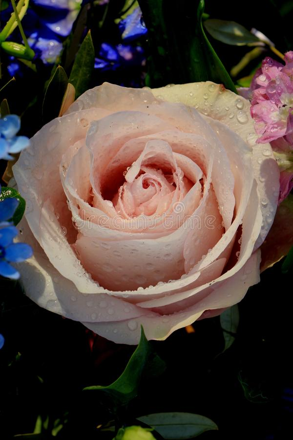 Big pale purple rose. In a floral wedding decoration stock photos