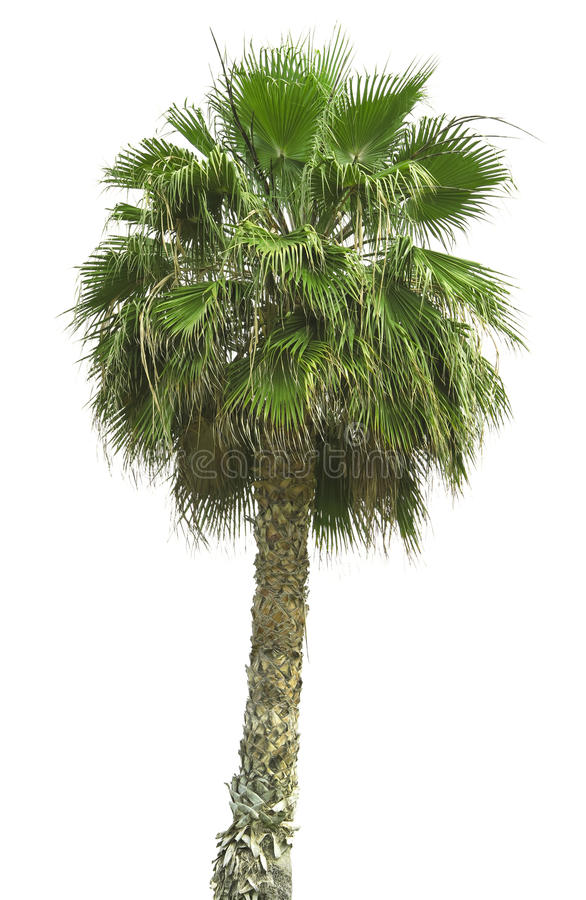 Free Big Palm Royalty Free Stock Images - 24552169