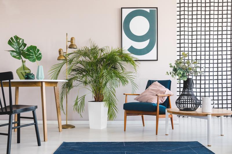 Big palm plant in white pot in stylish living and dining room interior with round table and vintage armchair with pastel pink. Big palm plant in white pot in stock image