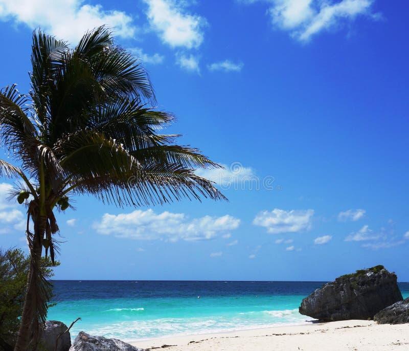 Download Big Palm Tree Ashore Royalty Free Stock Photos - Image: 31125678