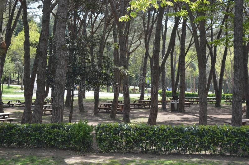 Big partk with trees and benches. Photo of big park with lots of plants and trees and benches in middle of it, cloudy sky in background stock photo