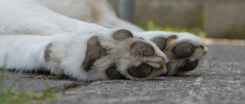 Big Paws stock photo