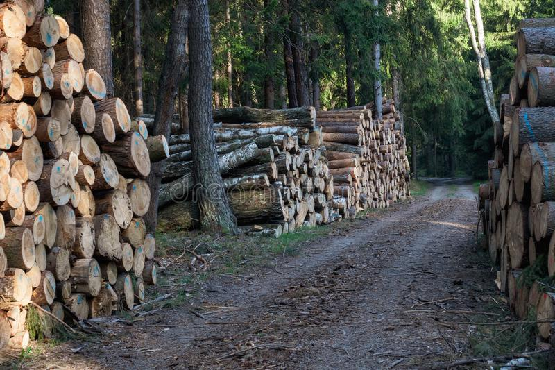 A big pile of wood. In a forest road royalty free stock photos