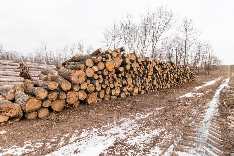 Big pile of wood. In the forest stock photos