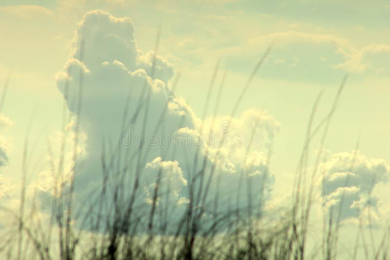 Big puffy clouds over sea grass stock photo