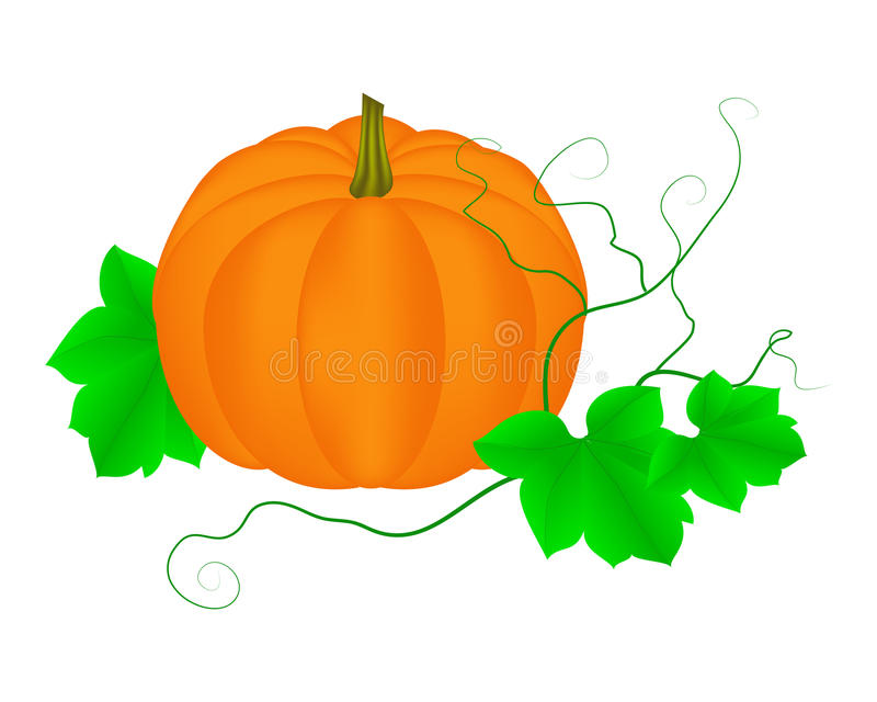 Big pumpkin. With leaves isolated on a white. Vector illustrator royalty free illustration