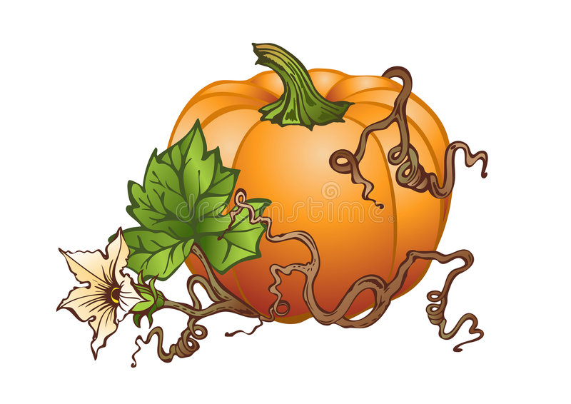 Big pumpkin. Illustration based on hand drawing of big pumpkin with leaves and flowers