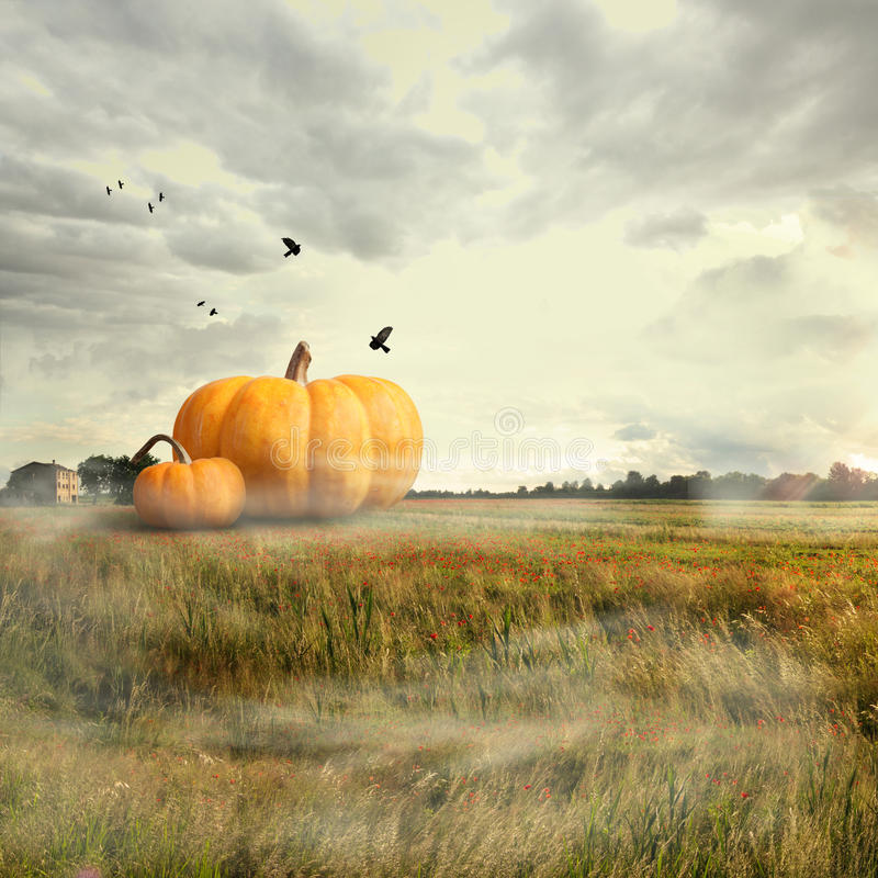 Free Big Pumpkins In A Field Royalty Free Stock Photos - 34274738