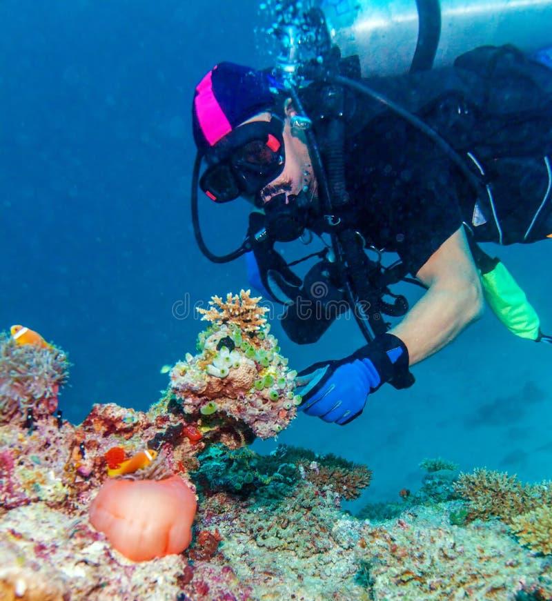 Big Purple Anemone and Scuba Diver stock image